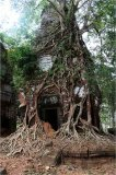 Hinduistický chrám zarůstající džunglí